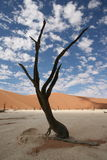 Tree in desert. A dead looking tree in the Namibian desert Stock Photography