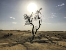 Tree in the desert. Dead tree in the middle of desert Royalty Free Stock Photos