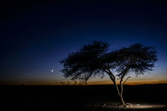 A tree in the desert by dusk Stock Image