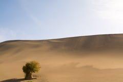 Tree in desert. Landscape photography of Gobi Desert, Dunhuang, Gansu Province, China Royalty Free Stock Photos