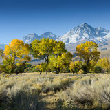 Tree in desert landscape / USA / America mountains Stock Images
