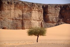 Tree in the desert, Libya Stock Photo