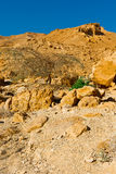 Tree in Desert Stock Image