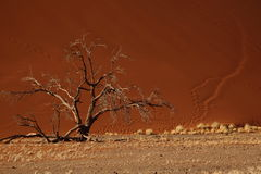 Tree and Desert Sand Dune Royalty Free Stock Image