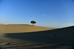 A tree in the desert Royalty Free Stock Images