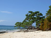 Tree on a deserted beach Stock Image