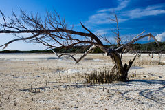 Tree on a deserted island. Dramatic tree in the Bahamas Stock Photo