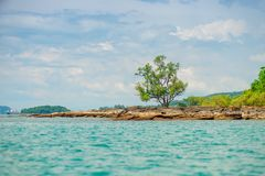 Tree on a deserted rocky beach of a tropical. Uninhabited island Stock Photos