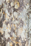 Tree Detail- Background. Tree Detail- Nature Background, Spring Royalty Free Stock Image