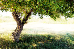 Tree detail. Branchs and trunk Royalty Free Stock Photography