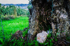 Tree Detail In Natural Environment Royalty Free Stock Photos