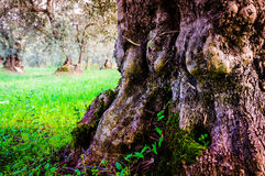 Tree Detail In Natural Environment Stock Photography