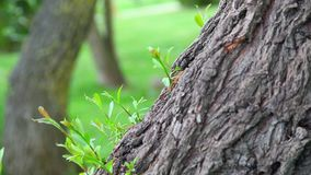 Tree detail in nature. In Istanbul, Turkey stock video footage