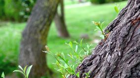 Tree detail in nature. In Istanbul, Turkey stock video