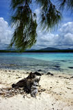 Tree in deus cocos mauritius Stock Photo