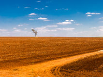 tree in a devastated field land royalty free stock photos
