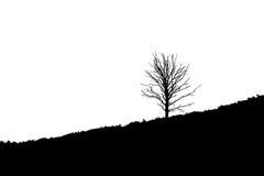 Tree on diagonal sloping heathland, Posbank Rheden Netherlands Royalty Free Stock Photo