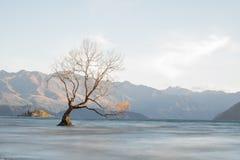 Tree on lake wanaka. stock image