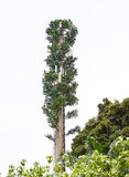 Tree in disguise Royalty Free Stock Photo