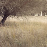 Tree in Doñana Natural Park. Royalty Free Stock Photo