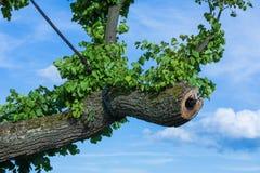 Tree doctor Royalty Free Stock Photo