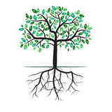 Tree dollar currency Royalty Free Stock Photography