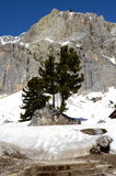 Sembra che si guardino. Tree in the dolomities. The beautiful nature royalty free stock photography