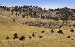 Tree Dotted Hillside Royalty Free Stock Images
