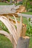 Tree Down Stock Photos