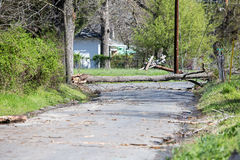 Tree down along with power lines. Tree down blocking the road storm damage stock photos