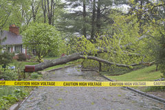 Tree Down, Caution High Voltage Stock Photography