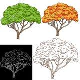 Tree Drawing Royalty Free Stock Photo