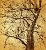 Tree drawing. Grunge background with a winter tree drawing Royalty Free Stock Photos