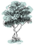 Tree drawing Stock Photo