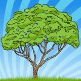 Tree Drawing Sketch Stock Photos