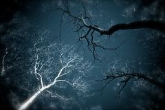 Tree Dream. Manipulated image, conveying a dream about birch and maple tree branches against a dark sky Royalty Free Stock Photo