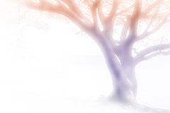 Tree of dreams Royalty Free Stock Photo