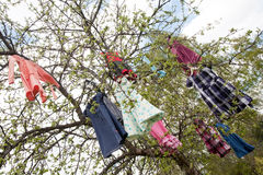 Tree of dresses. Tree with girl's colored dresses hanging on branches Royalty Free Stock Photography