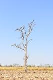 Tree dried Stock Photos