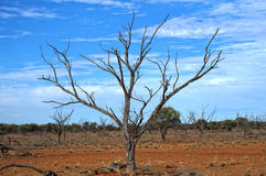 Tree in drought Stock Photo