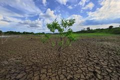 Tree and drought parched ground. Royalty Free Stock Photos