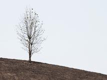 Tree on dry desert land Stock Image