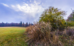 Tree and dry grass in the pasture Stock Photo