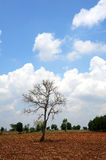 Tree in dry grassland with beautiful sky Stock Image