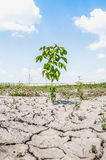 Tree on dry ground at hot sunny day Royalty Free Stock Image