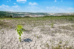 Tree on dry ground at hot sunny day Royalty Free Stock Photography