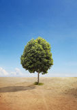 A Tree on A Dry Land Royalty Free Stock Image