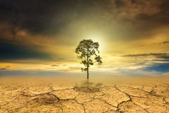 Tree dry soil texture background Stock Image