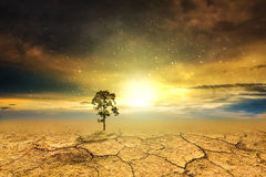 Tree dry soil texture background Royalty Free Stock Photography