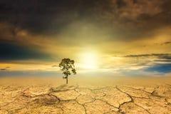 Tree dry soil texture background Stock Photos